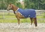 Manta caminador horse trainer