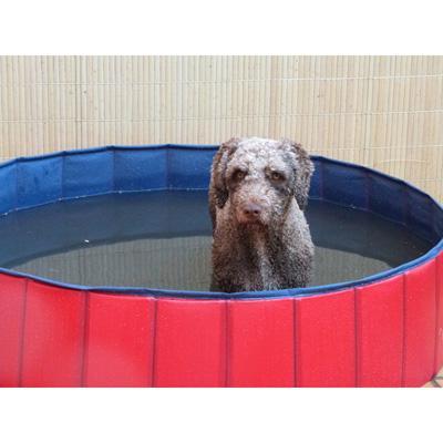 Piscina para perros 80x20 cm hipican tienda h pica for Piscina para perros