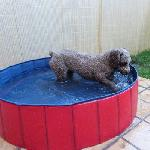 Piscina para perros 120x30 cm